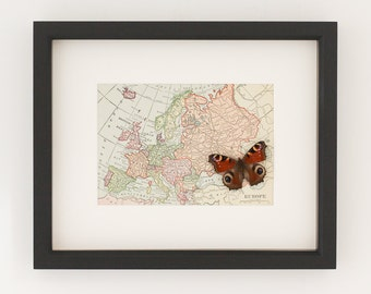 Framed Vintage Map of Europe with real native butterfly natural history display