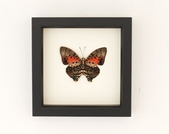 Real Framed Butterfly Display UV Blocking Glass Bug Under Glass