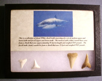 Great White .TOOTH Collection