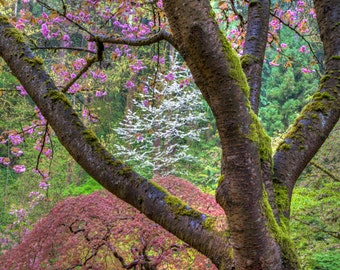 Japanese Garden Photo, Spring Photograph Flower Photography Colors Springtime Blossoms Dreamy Zen Wall Art nat108