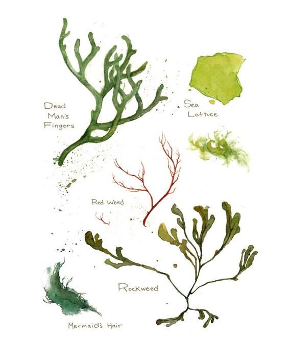 Seaweed Botanical Watercolor Art Print 8x10