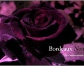 Bordeaux Noir Oil Perfume Fruity Rose Deep Burgundy French Cassis