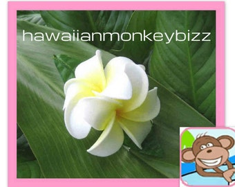 DOUBLE Foam PLUMERIA Rounded Clip - Your Choice of 1 . . .