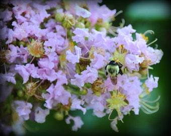 ACEO - Busy Little Bee on hydrangea