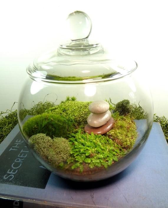 kleine berdachte vase hydrokultur terrarium glas cairn und. Black Bedroom Furniture Sets. Home Design Ideas