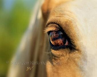 Horse Art/ photograph/ Palomino Fox Trotter/ horse eye/ golden marco photo/ hrose head shot/ flaxen mane/ equine fine art/ horse wall art
