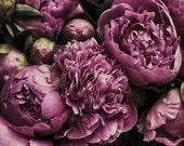 Photographic Print, Pink Rose trio, Printable Art, still life