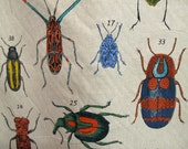 BUGS screenprint fabric by Design Legacy