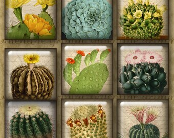 1 inch VINTAGE CACTUS Digital Printable Squares collage sheet for Jewelry Pendants Magnets Crafts...Antique Botanical Art