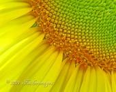 Nature Flower Macro Yellow Sunflower Photo Print Wall Art Home Decor Fine Art Photography