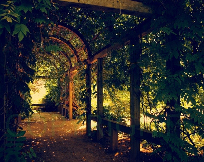 Romantic Arbor Garden Botanical Photography Photo in Print or Greeting Card, Gift Idea, Wall Art