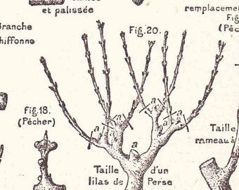 Antique French Print Book Page 1920s Engraved Ilustrations Garden Pruning Fruit Trees Orchard