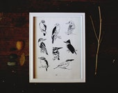 Kingfisher Nature Study 8x10 illustrated art print, drawing, birds, natural history, nature, sketch, vintage style
