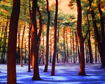 Pine Tree Grove Infrared Colorful Interpretation in Garfield Park in Grand Rapids Michigan No.095 - An Infrared Fine Art Photograph