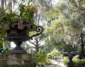 Afternoon In a Garden - Beaufort, SC - An Original Photograph by Melissa Schneider
