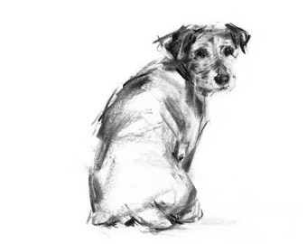Jack Russell Terrier dog sketch  - Collectable art print