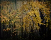 "woodland photography nature tree surreal photography fine art photo ""Adventure Awaits"" yellow mystery rustic cabin decor"