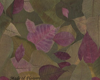 "Digital File of ""Pile of Poinsettia"" ~Reserved for Janet~"