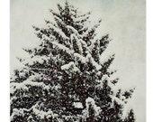 Nature photography, winter scene, snow tree, wall decor, fine art photography