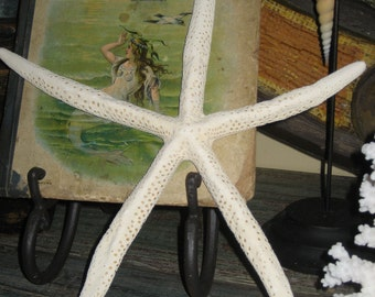 Three Beautiful Extra Large White Starfish