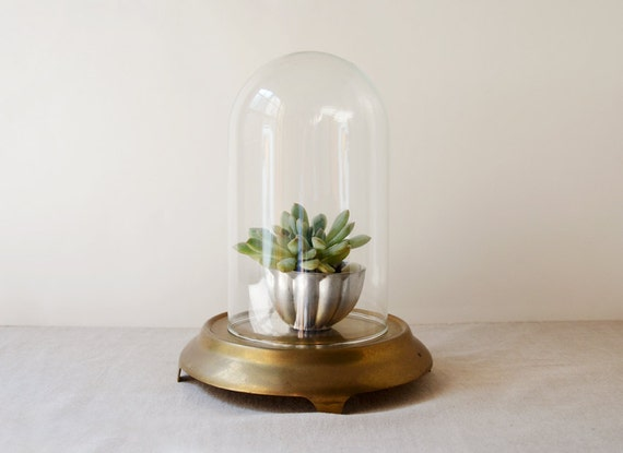 Vintage Glass Display Dome with Brass Base - 8 inch dome