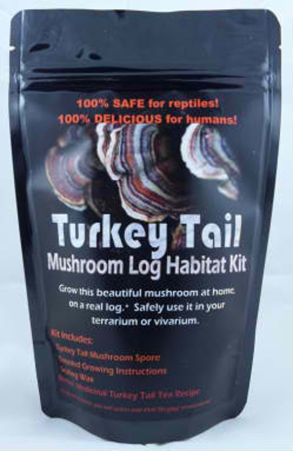 Turkey Tail Mushroom Growing Kit For Terrariums Medicinal Tea Gorws For Years!!  ON SALE Limited Time