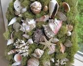 Mermaid's garden, basket of shells, shell garden moss centerpiece - soft green reindeer moss, seaside wedding, use on wall or table top