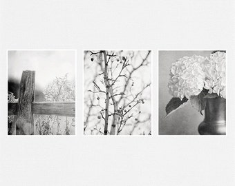 Black and White Photography Set, Nature Photography, Landscape Photography, Shabby Chic Home Decor Print Set, Hydrangeas, Pears, Fence.