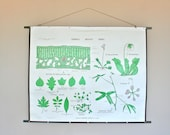 Vintage 1960s Double-Sided School Chart:  Leaves and Coelenterates
