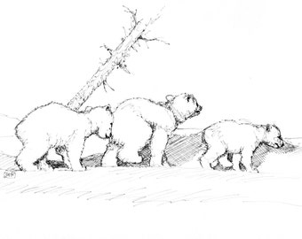 Three Bear Cubs. Pen and Ink Drawing