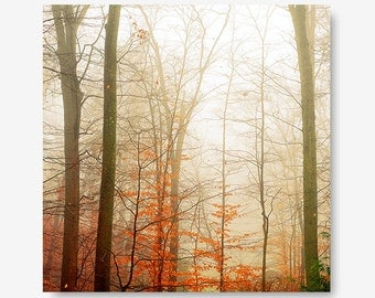Red tree fog photo, rust, foggy photo, nature photography, landscape print, red orange trees, fall print, dreamy fog landscape