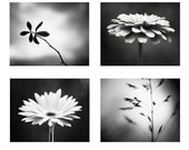 Black and White Photography Set - Four Photographs 4 - nature flower modern prints dark grey decor gray wall art botanical photo set artwork