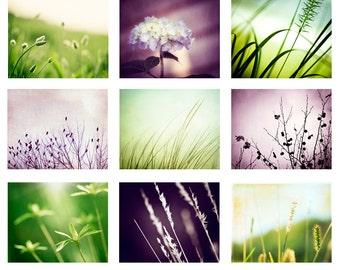 Purple and Green Photography Set - Nine Photographs, nature dark purple light green plum violet modern art prints botanical gallery wall set