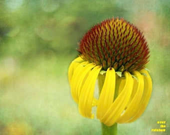 Dreamy yellow flower, Nature photography, Black Eyed Susan, Flower print, Wildflower meadow, Living room wall art, Rustic home décor