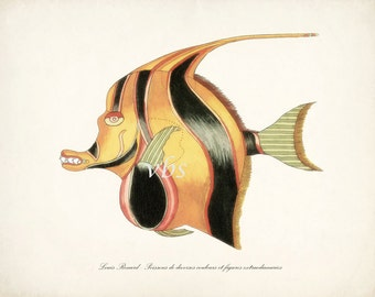 Fanciful Fish Coastal Decor Nautical Art Print No. 6 10 x 8