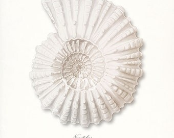 Coastal Decor Nautilus Sea Shell Nautical Giclee Art Print 8x10