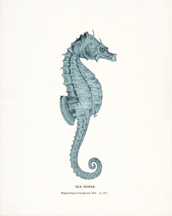 Coastal Decor Antique Sea Horse Natural History Nautical Giclee art print - tide pool