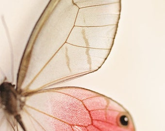 Butterfly Photography- Butterfly Wings Print, Pink Glasswing Photo, Macro Photography, Pink Brown, Nursery Decor, Insect Art, Butterfly Art