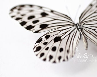 Butterfly Photography- Ideopsis Gaura, Black and White Butterfly Photo, Macro Photograph, Butterfly Art, Wood Nymph Butterfly, Insect Art