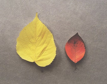 Yellow and Red leaves. Still life fall foliage