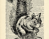Gray Squirrel Forest Dictionary art vintage animal on Upcycled Vintage Dictionary Paper - 7.75x11
