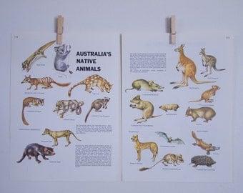 australia's native animals vintage prints