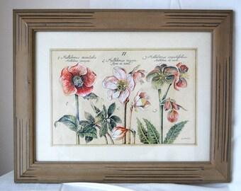 Vintage L. David Framed Botanical Print, Vintage L. David Helleborus Print, Vintage Framed Floral Art from The Eclectic Interior