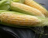 Corn - Golden Bantam - Heirloom    25 Seeds
