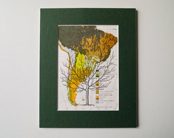 """Tree on Vintage Original Map of South America - Ready to Frame, 8 x 10"""""""