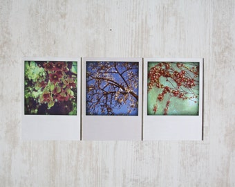three flower postcards in polaroid style