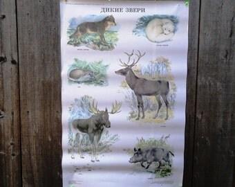 Large School Poster 1991 - Wild animals