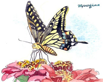 ACEO Limited Edition 2/25 - Butterfly and zinnias
