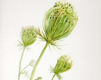 Queen Anne's Lace watercolor painting original, original illustration, garden lovers gift
