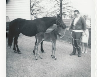 Mothers and Sons - Vintage 1950s Mare and Newborn Foal Photograph